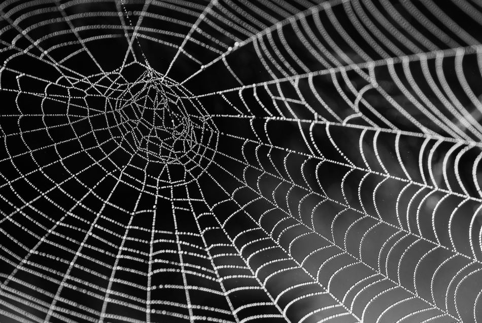 Cobweb with beads of dew against a dark background